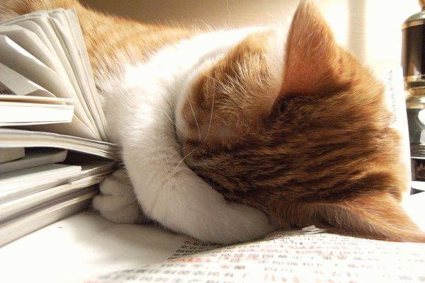 Устал учиться и уснул
